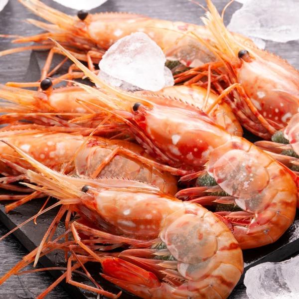 【ドデカ!牡丹海老】高級寿司ネタの代表としても知られる牡丹海老。その中でも超がつくほど希少な特大2Lサイズ(500g×2))(沖縄県・一部離島への配送については承っておりません。)